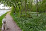Bonnie had a walk along Väddö Channel today.