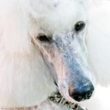 Bright white, sleepy, Bonnie
