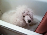 Bonnie takes cover in the bathtub from all nasty firecrackers and fireworks outside.