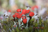 plants, flowers and fungi