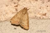 moth id 21