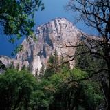 El Capitan Tree Frame up