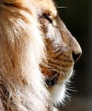 zoo_en_macro