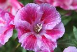 Wet flower