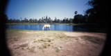 horse at angkor