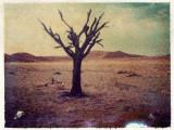 Tree and Skull