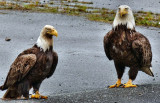 Pegleg and Broken-Toe Ponder Their Next Move