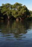 Ebony Grove