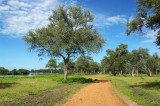 Luangwa Wafwa Oxbow