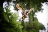 An owl (II)