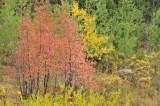 Autumn 2008 _DSC9642.jpg