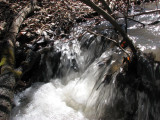City Creek - one of many mini waterfalls IMG_1211.jpg