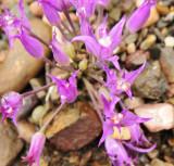 wild flowers _DSC8527.jpg