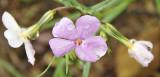 wild flowers _DSC8577.jpg
