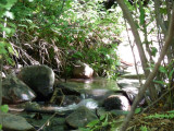 City Creek P1010331.jpg