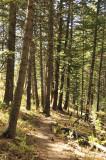 Scout Mountain Nature Trail _DSC2571.jpg