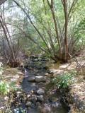 City Creek P1020681.jpg