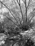 City Creek P1020690.jpg