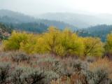Autumn on Scout Mountain smallfile P1030221.jpg