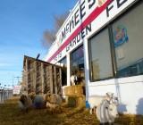 Sheep and Goats at McKees Pocatello P1040288.jpg
