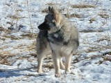 Wolfi P1040229.jpg