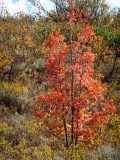 Autumn on Buckskin DSCF5941.jpg