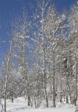 aspen the day after the snow _DSC0024.jpg