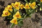 Trimmers flowers _DSC0043.jpg