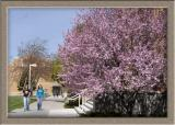 Springtime on the ISU Campus smallfile _DSC0021.jpg