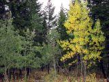 Autumn comes to Scout Mountain smallfile IMG_0586.JPG