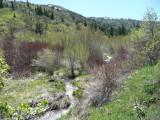Gibson Jack Creek - Spring Scene - P1020585.jpg