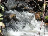 Gibson Jack Creek roaring in May P1020602.jpg