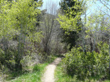 Gibson Jack Trail P1020596.jpg