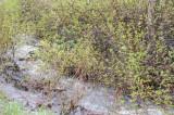 Springtime at Inman Creek Inkom _DSC3755.jpg