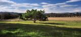 Yarra Glen farmland