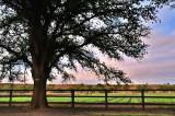 On the boundary of the farm ~
