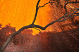 Tree branch and Ayers Rock