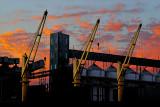 Cranes at Twilight ~*