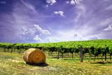 Lone hay bail ~