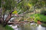 Creek at Bacchus Marsh