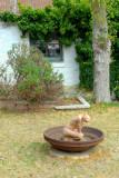 Bird bath on the lawn