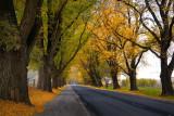 Avenue in Autumn ~