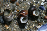 Waldo Point, snail shells