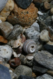 snail shells, Waldo Point