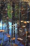 swamp01.jpg