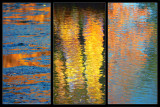 Fall colors triptych.