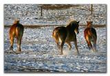 Winter Horseplay.