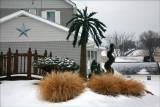 Palm Tree Winter.