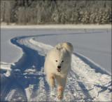 Blanca on Ice