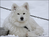 Alpha the Snowqueen